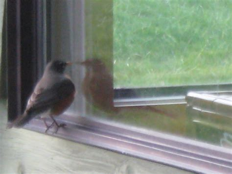 bird tapping at window