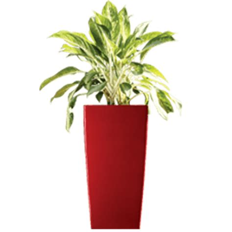 fiber glass planters cubico small greenmylife anyone