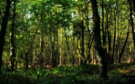 a forest forest hd wallpaper 92231