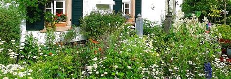 Plants For A Traditional Cottage Garden Blues Cosy Traditional Cottage Garden Flowers