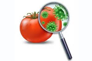 biotecnologia alimentare sicurezza alimentare italia e gb prime per segnalazione