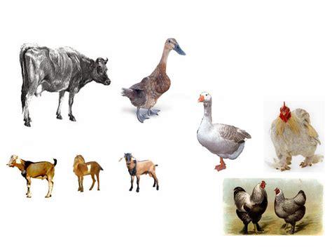hewan  mudah diternak