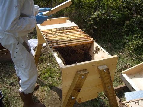what is a top bar hive my adventures with bees introduction the arid land