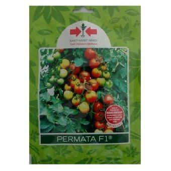 Benih Tomat Permata benih tomat permata f1 1 750 biji panah merah
