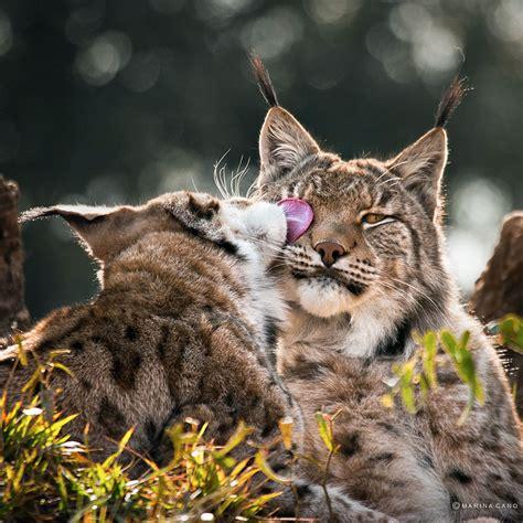 imagenes animales sarcasticas hermosas imagenes de animales salvajes en su habitat narutal