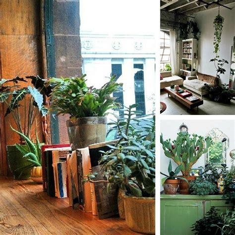House Plant Ideas | decorating dilemma house plants decorator s notebook