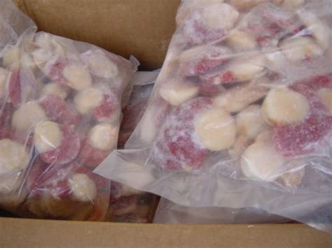 chile scallops for export