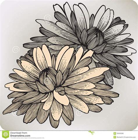 chrysanthemum flower hand drawing vector illustr stock