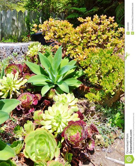 Variety Of Flowers For Garden Bright And Colorful Variety Of Succulent Cactus Plants Stock Photo Image 43664896