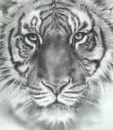 tiger drawings in pencil archives pencil drawing collection
