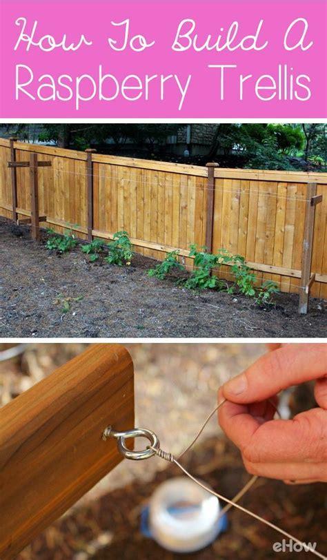build  raspberry trellis growing raspberries