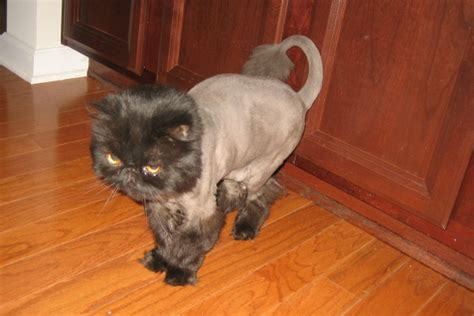Www Online Sweepstakes Com - pictures of shaved cats