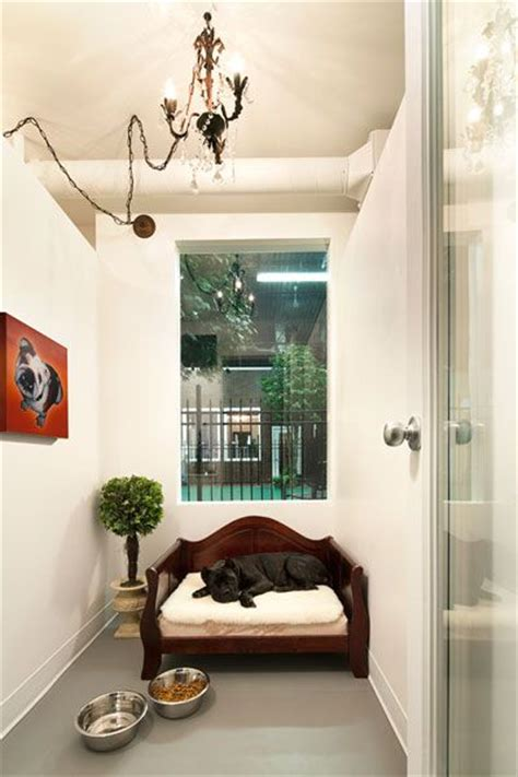 hotels that take dogs 25 best ideas about hotel on hotels that take dogs boarding and