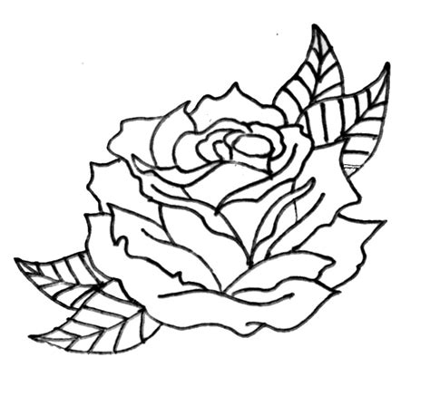 rose pattern line drawing outlines of roses clipart best