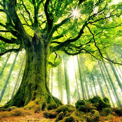 wallpaper green tree download nature green tree 2048 x 2048 wallpapers