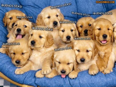 imagenes graciosas de buenos dias de perros 161 buenos d 237 as