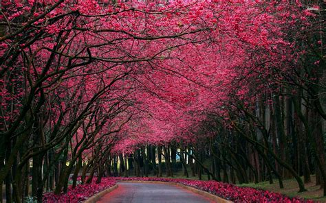 Autumn Pink pink flowers autumn trees park hdwallpaperfx