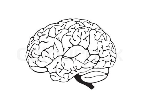 White Brain brain is a black and white side view stock vector