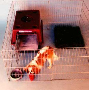 bringing a puppy home for the time 25 best ideas about puppy playpen on playpen puppy crate and crate
