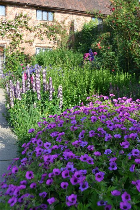 do deer eat geraniums 50 best images about borders on gardens