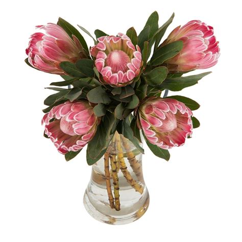 plant food for cut flowers proteas woolworths co za