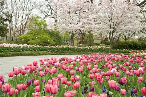 dallas arboretum botanical gardens tx top tips before