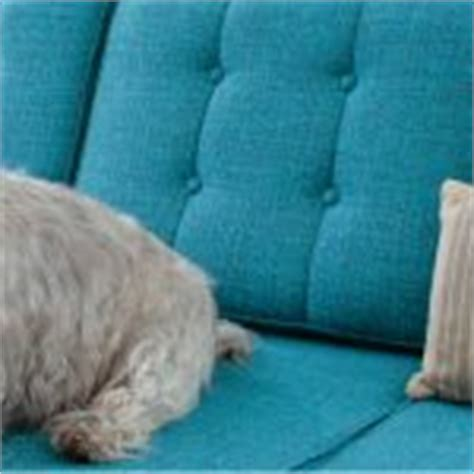 dog friendly couches best fabric couches for dogs homesfeed