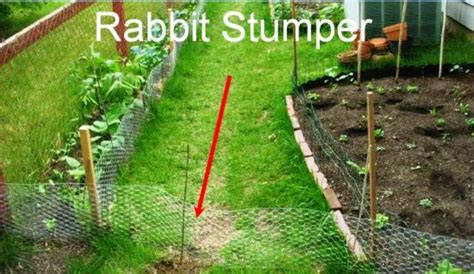 garden pest management how to build a rabbit proof fence