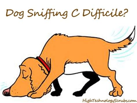 c diff in dogs 18 best images about school projects on federal and how to be