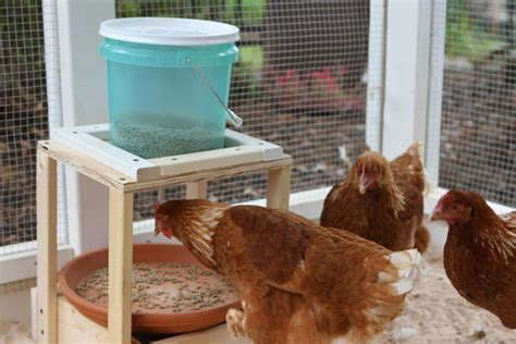 Backyard Chickens Waterer Lake Norman Coop De Ville Waterer And Feeder Backyard