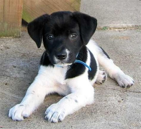 wral puppies 25 best ideas about terrier mix on terrier mix breeds mix