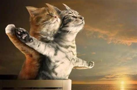 film lucu kucing kumpulan foto anak kucing lucu yang bakal bikin kamu gemes