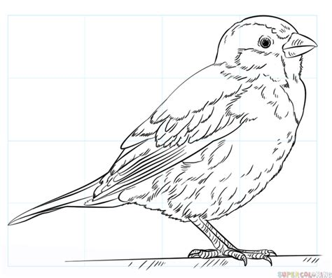 how to draw a house sparrow step by step drawing tutorials