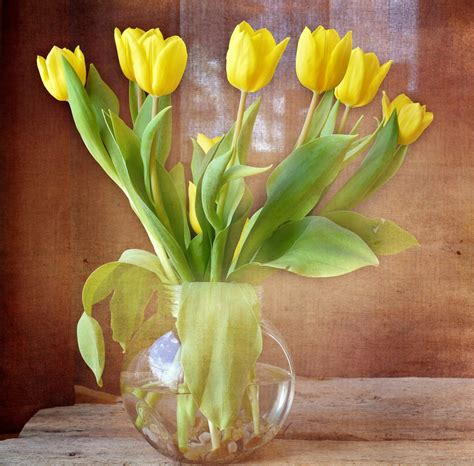 Plant Vase Free Images Wood Flower Tulip Vase Botany Flora