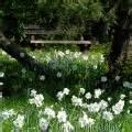 Britzer Garten Regeln by Wei 223 E Narzisse Dichternarzisse Duft Narzisse Duftende