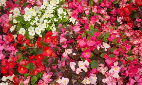 summer bedding plants groupon