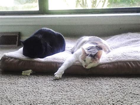 dru hill sleeping in my bed remix sleeping in my bed remix file cats sleeping on a dog bed