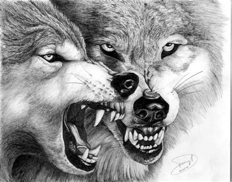 drawn wolf wolf fight pencil and in color drawn wolf