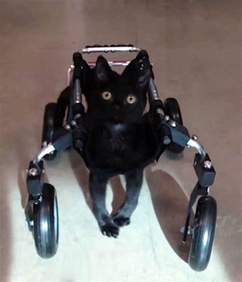 sulla sedia tumbelina la gattina sulla sedia a rotelle