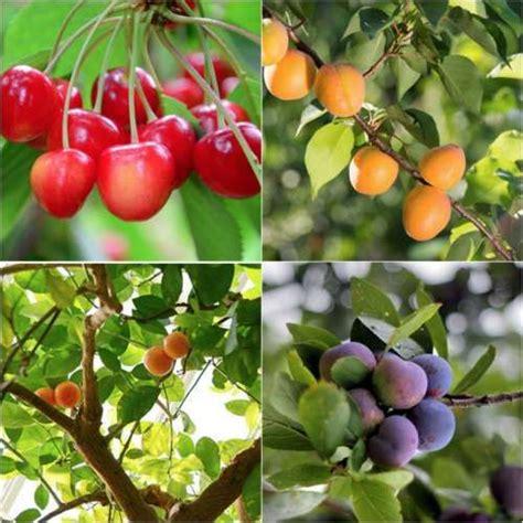 planting fruit trees in backyard 17 best ideas about fruit trees on pinterest planting fruit trees fruit tree garden