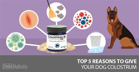 colostrum for dogs top 5 reasons to give your colostrum dogs naturally magazine