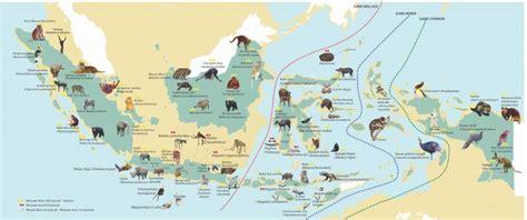 Atlas Binatang Mamalia 2 penyebaran fauna di indonesia beserta ciri cirinya parararam