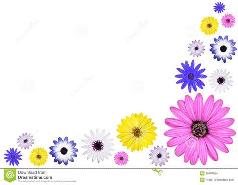 imagenes de varias flores varias flores coloreadas multi de la margarita de