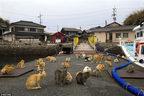 cat island japan s aoshima island cats outnumber humans six to one