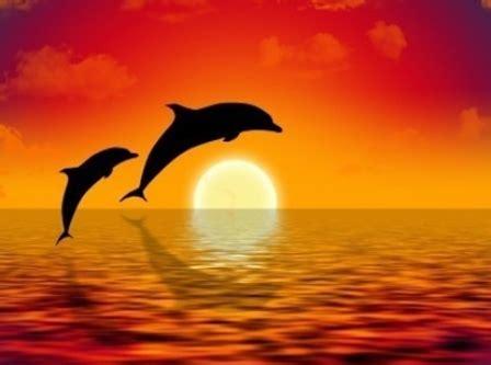 beautiful sunset wallpaper mobile phone amazing