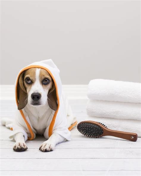 how to make bath time fun for dogs dog training nation 197 best cute funny images on pinterest bath time