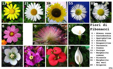 fiori elenco nomi fiori di fibonacci