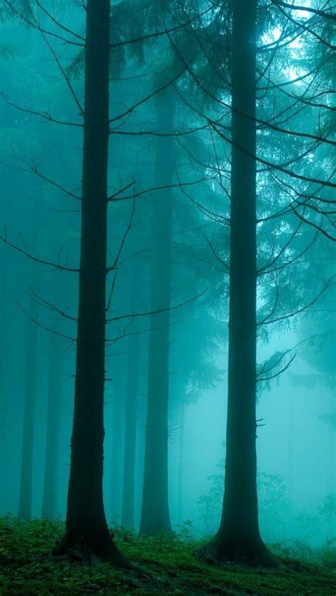 foggy forest iphone wallpaper wallpapersafari