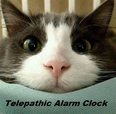 telepathic alarm clock cat morning cats and kittens alarm clock clock and