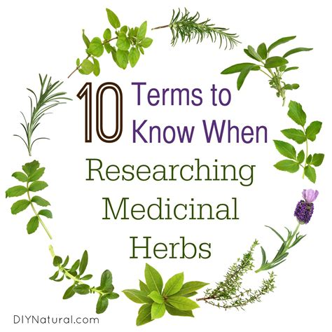 i want to know all natural herbs and vitamin that inhibit 5ar medicinal herbs 10 terms you need to know for research